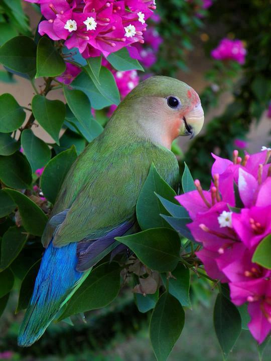 http://uyanangenclik.com/resimler/hayvan/papagan1.jpg